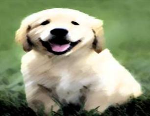 dickerhund